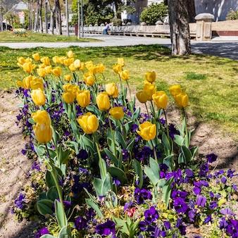Tulipas no jardim de um parque da cidade em el escorial, em madrid. unesco,