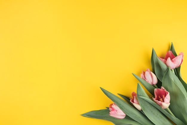 Tulipas rosa em fundo amarelo