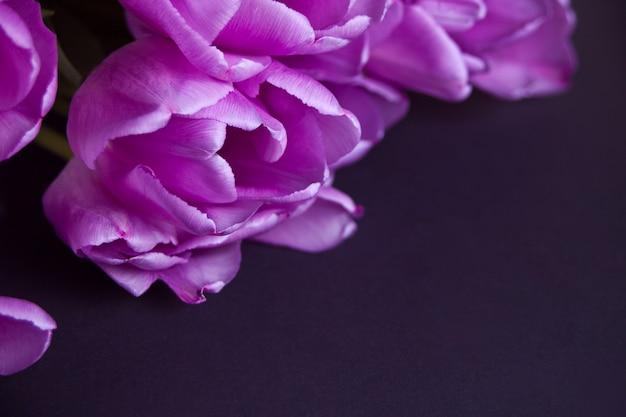 Tulipas roxas violetas no fundo preto. copie o espaço.