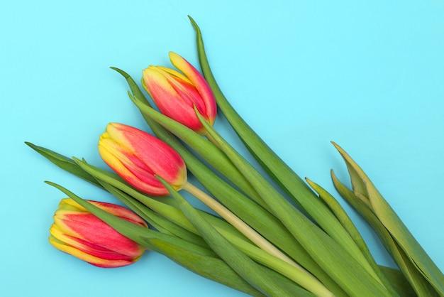 Tulipas sobre um fundo azul claro. flores frescas da primavera