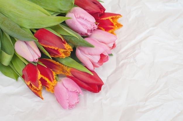 Tulipas vermelhas e rosa em papel branco amassado