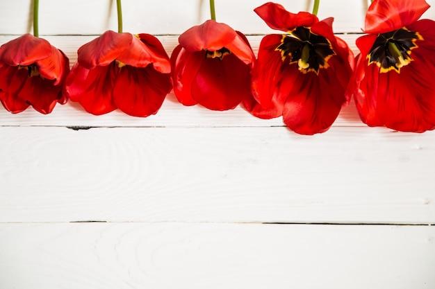 Tulipas vermelhas em fundo branco de madeira, em uma fileira, closeup, conceito flores da primavera