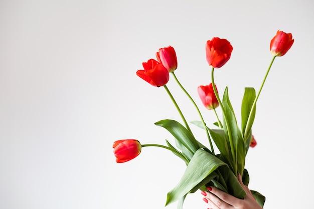 Tulipas vermelhas em fundo branco. flores da primavera e o conceito de floricultura.