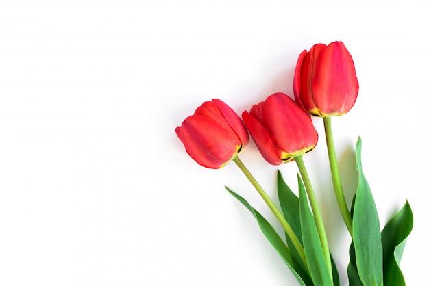 Tulipas vermelhas em um vaso isolado no fundo branco.