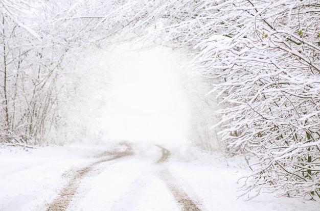 Túnel da floresta de inverno. caminho, em, floresta escura, em, inverno, tempo