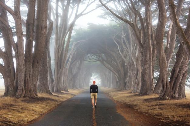Túnel de árvores verdes.