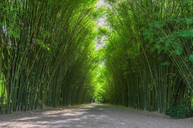 Túnel de bambu. adequado para imagens de fundo.