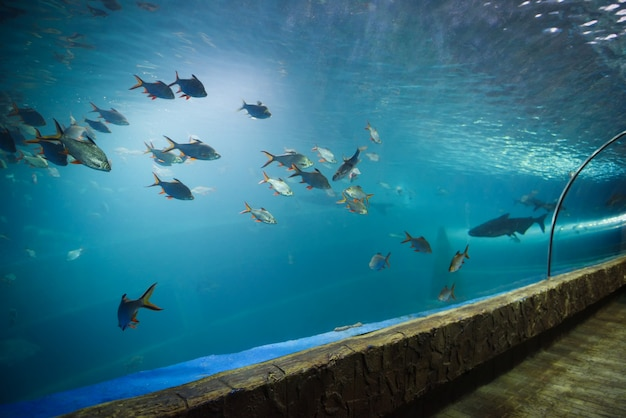 Túnel de peixes no aquário subaquático diferentes tipos de peixes nadando no tanque do aquário
