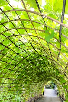 Túnel de planta verde no jardim
