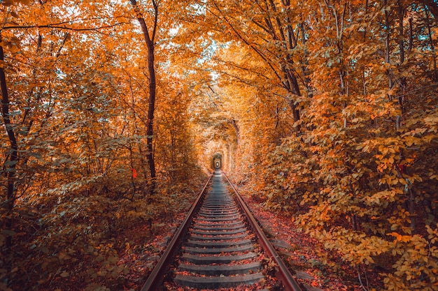 Túnel do amor no outono