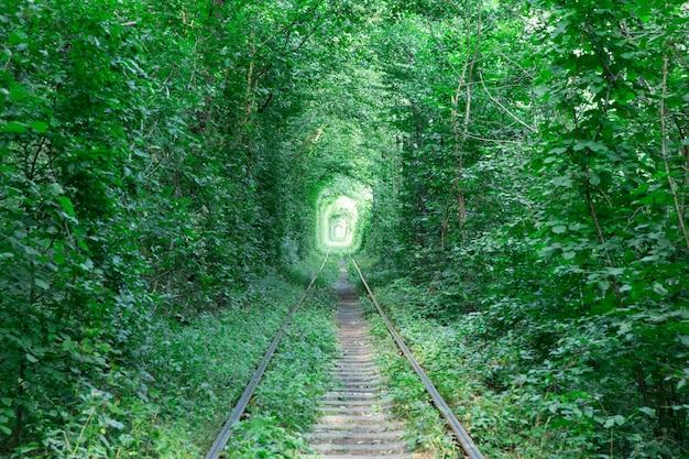Túnel do amor. trilho de trem passando pela floresta