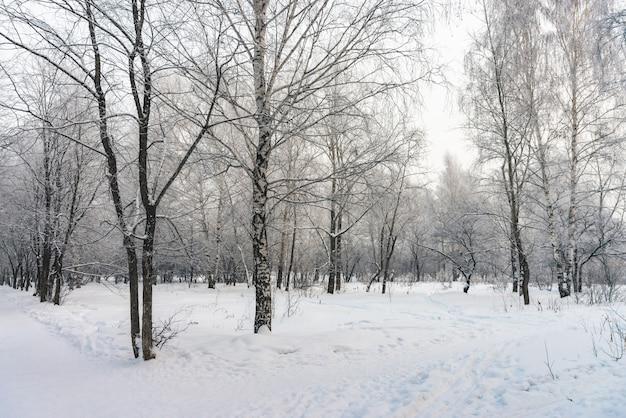 Túnel nevado entre galhos de árvores no parque close-up