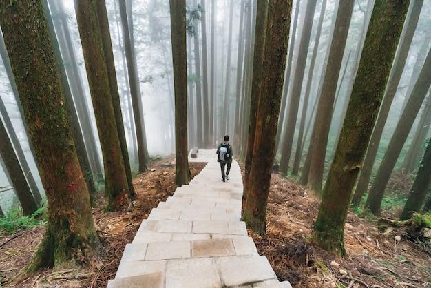 Turismo masculino descendo a escada de pedra na floresta japonesa de cedro