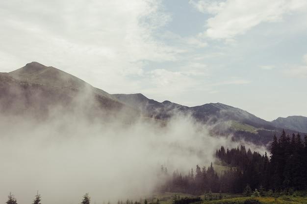 Turismo, montanhas, estilo de vida, conceito de natureza - encosta de montanha florestada em nuvens baixas com coníferas verdes envoltas em névoa em uma vista panorâmica da paisagem