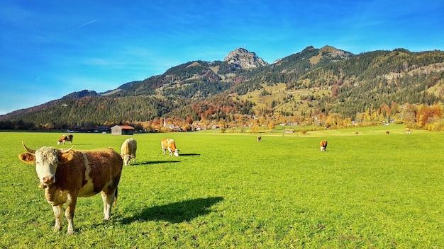 Turismo rural em bayern