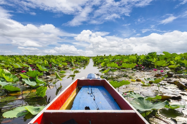 Turista de barco tradicional com lindos nenúfares no pantanal talay noi, phatthalung, tailândia