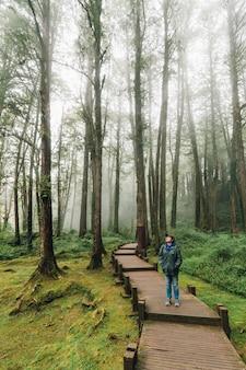 Turista de mulher andando ina floresta com árvores gigantes