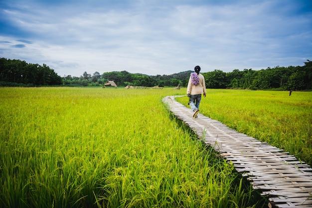 Turista desfrutar de ar fresco da paisagem rural, na ponte de madeira no campo de arroz no norte da tailândia