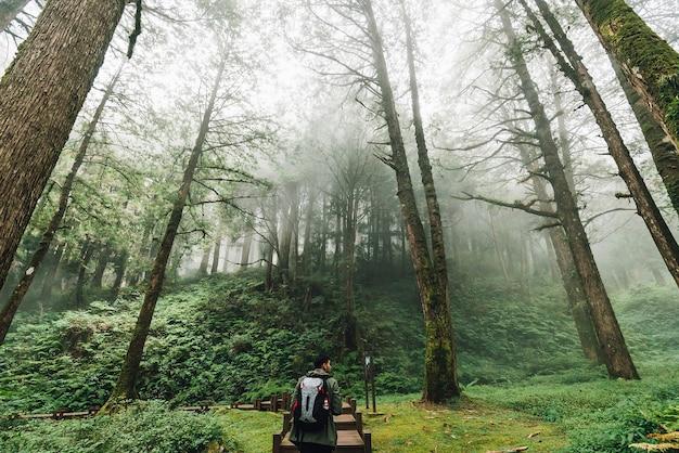 Turista que anda em árvores japonesas do cedro e de cypress na floresta na área de recreação nacional da floresta de alishan no condado de chiayi, distrito de alishan, taiwan.