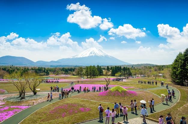 Turistas e fotógrafos tirando fotos de shibazakura rosa linda