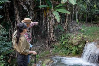 Turistas masculinos e femininos estão apreciando a floresta.