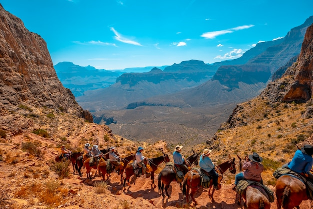 Turistas panorâmicos de mula no trekking south kaibab trailhead. grand canyon, arizona