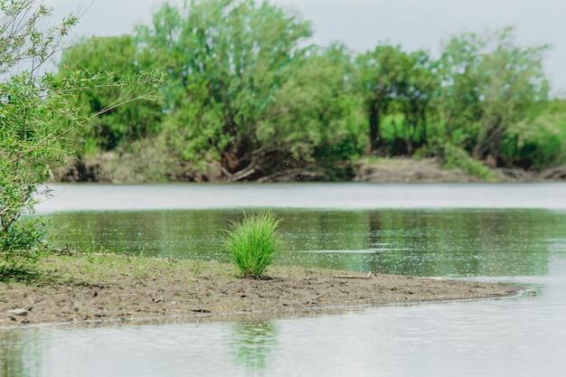 Tussock de grama verde solitária crescendo em uma margem do rio no verão