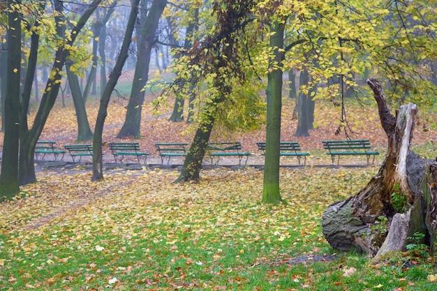 Última folhagem, caminho de pedestres e bancos no parque urbano enevoado do outono