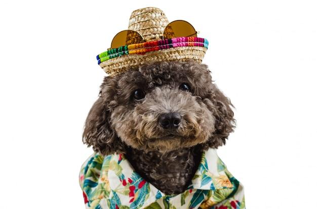 Um adorável cão poodle preto vestindo camisa havaiana, chapéu e óculos de sol