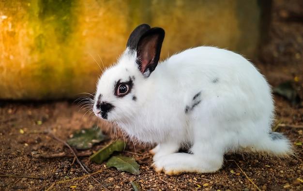 Um adorável coelho branco come cenoura no zoológico.