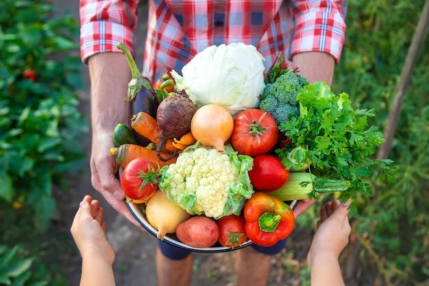 Um agricultor e uma criança estão segurando uma colheita de vegetais nas mãos. foco seletivo. natureza.