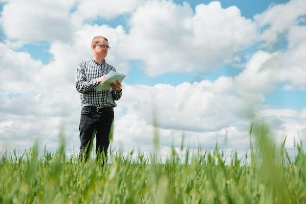 Um agrônomo investiga o processo de amadurecimento de trigo jovem no campo. conceito de negócio agrícola