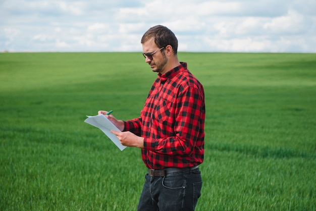 Um agrônomo investiga o processo de amadurecimento de trigo jovem no campo. conceito de negócios agrícolas. o fazendeiro trabalha em um campo de trigo e inspeciona a qualidade dos brotos de trigo