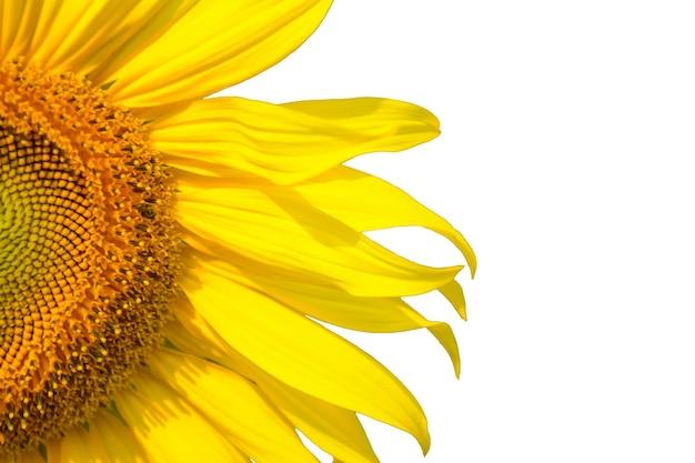 Um ângulo disparado perto da metade do fundo amarelo bonito do girassol.