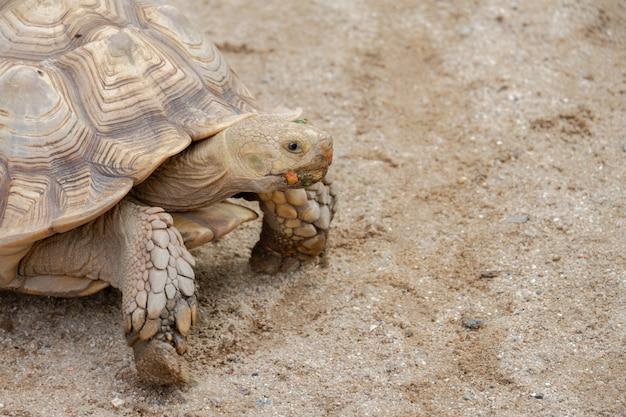 Um animal de estimação bonito tartaruga no zoológico de animais