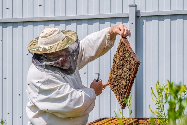 Um apicultor com roupas de proteção segura uma moldura com favos de mel