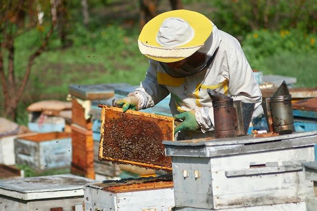 Um apicultor em um apiário verifica colmeias com abelhas