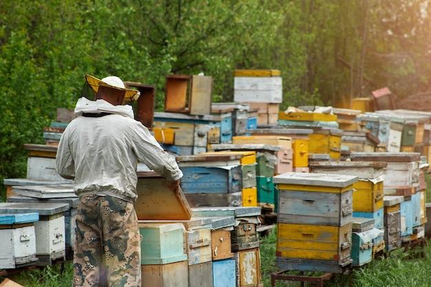 Um apicultor em uma roupa de proteção fica de costas para a câmera e verifica uma colmeia com abelhas