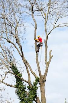 Um arborist cortar uma árvore com uma motosserra