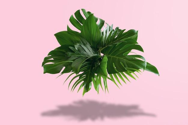 Um arbusto de folhas verdes com um fundo rosa brilhante e sombras do sol - conceito tropical de verão