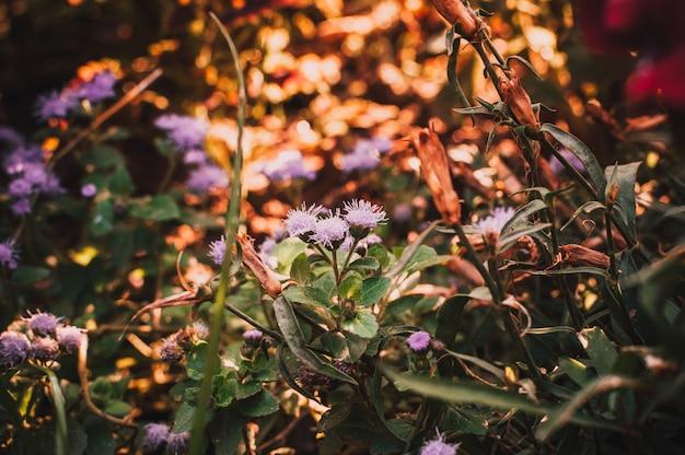 Um arbusto de pequenas flores roxas