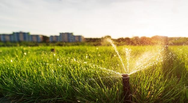 Um aspersor borrifa água no gramado ao pôr do sol contra a cidade. rega automática de relva