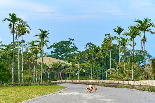 Um bando de cachorros selvagens sem-teto na estrada