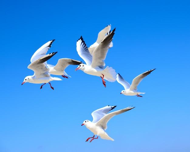 Um bando de gaivotas brancas flutuando no ar