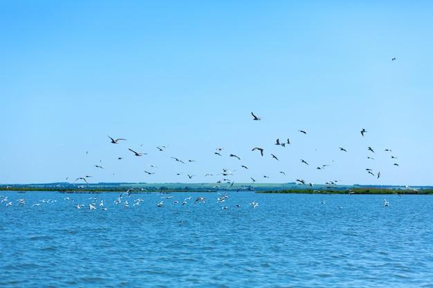 Um bando de gaivotas caçar peixes no rio
