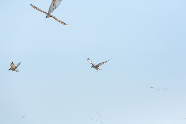 Um bando de gaivotas circulando no céu perto da costa do mar.