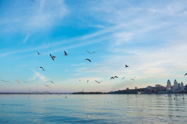 Um bando de gaivotas nas margens do rio da cidade.