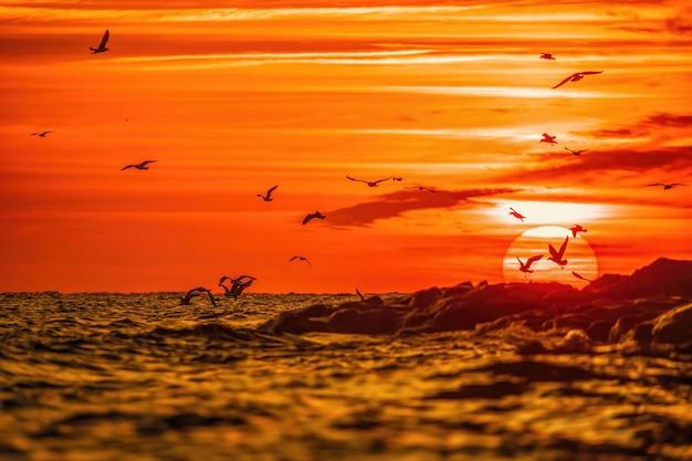 Um bando de gaivotas voam e pescam no céu quente do pôr do sol do mar sobre as silhuetas do brilho do sol do oceano