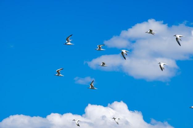 Um bando de gaivotas voando no céu azul contra o fundo de nuvens cumulus adoráveis pássaros selvagens em um dia ensolarado de verão