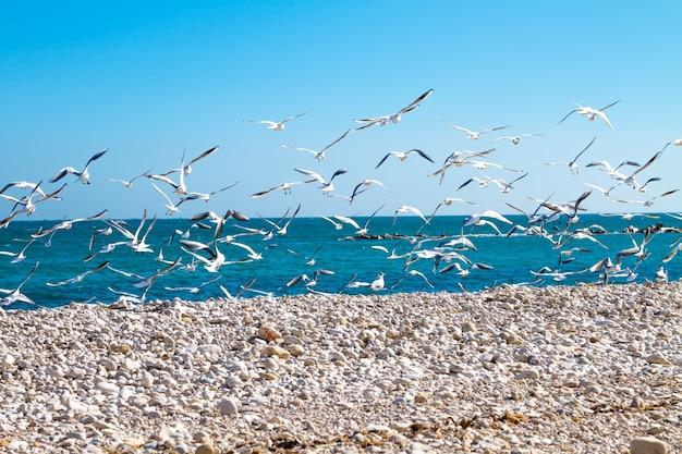 Um bando de gaivotas voando sobre uma praia em um fundo de mar e céu azul.